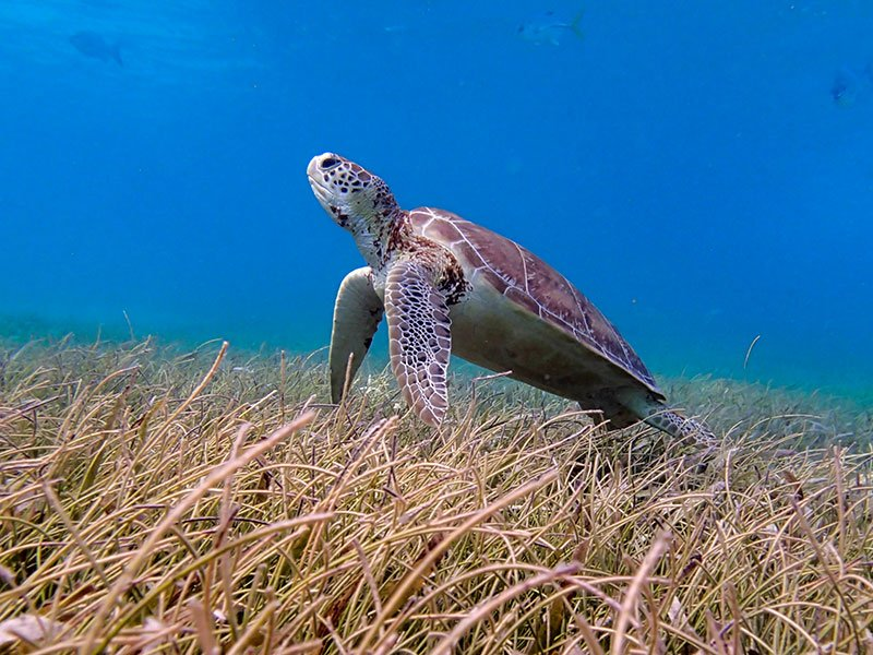 turtle © Authentic Travel All Rights Reserved